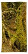 Moss-covered Tree Trunks  Beach Towel