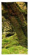 Moss Covered Trees In A Forest Beach Towel