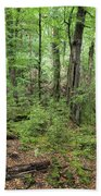 Moss Covered Trees In Forest, Lord Beach Towel