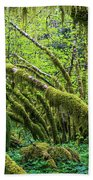 Moss Grows On Vine Maple Trees  Acer Beach Towel