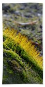 Moss In The Light Beach Towel