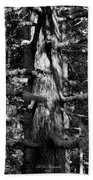 Moss On The Evergreens II In Black And White Beach Towel