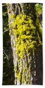 Moss On Tree Along Sentinel Dome Trail In Yosemite Np-ca Beach Towel