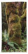 Mossy Big Leaf Maples In Hoh Rainforest Beach Towel