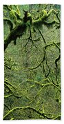 Mossy Trees Leafless In The Winter Beach Towel