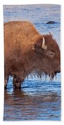Mother And Calf Bison In The Lamar River In Yellowstone National Park Beach Towel