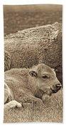 Mother Buffalo And Calf Sepia Beach Towel