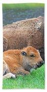 Mother Buffalo And Calf Yellowstone Beach Towel