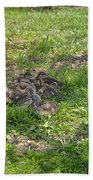 Mother Duck With Nest Beach Towel