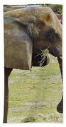 Mother Elephant Beach Towel
