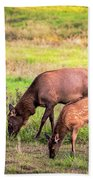 Mother Elk With Her Young Beach Towel