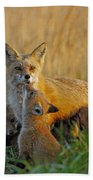 Mother Fox And Kits Beach Towel by William Jobes
