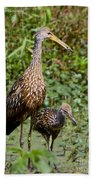 Mother Limpkin And Colt Beach Towel