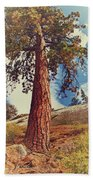 Mother Tree Beach Towel