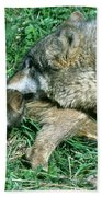 Mother Wolf Nuzzles Cubs Beach Towel