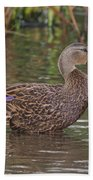 Mottled Duck Drake Beach Towel