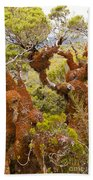 Mountain Beech Rain Forest In Fjordland Np Nz Beach Towel
