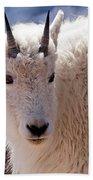 Mountain Goat Portrait On Mount Evans Beach Towel