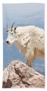 Mountain Goat Up High Beach Towel