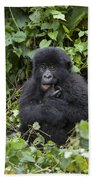 Mountain Gorilla Baby Chewing On Finger Beach Towel