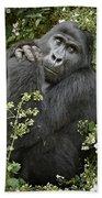 Mountain Gorilla Praying Beach Towel