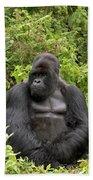 Mountain Gorilla Silverback Beach Towel