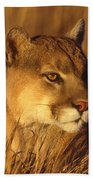 Mountain Lion Montana Beach Towel