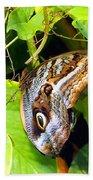 Mournful Owl Butterfly Wings Beach Towel