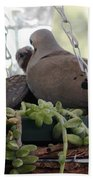 Mourning Dove Feeding Baby Dove Beach Towel