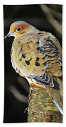 Mourning Dove On Post Beach Towel