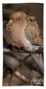 Mourning Dove Pictures 32 Beach Towel