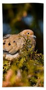 Mourning Dove Pictures 64 Beach Towel