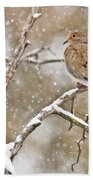 Mourning Dove Pictures 68 Beach Towel