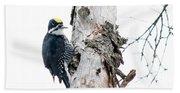 Mr. Black-bscked Woodpecker Beach Towel