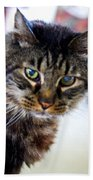 Mr. Lynx - Tabby - Cat Beach Towel