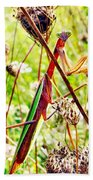 Mr Mantis Beach Towel