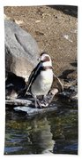 Mr Popper's Penguins Beach Towel by Bill Cannon