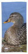 Mrs. Mallard Beach Towel