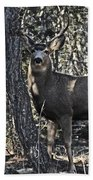 Mule Deer Buck Beach Towel