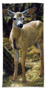 Mule Deer Fawn - Monarch Moment Beach Sheet by Crista Forest