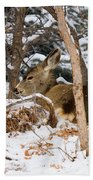 Mule Deer In Snow Beach Towel
