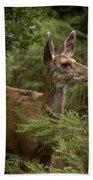 Mule Deer On Alert Beach Towel