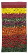 Mult-colored Tulip Field Beach Towel
