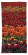 Multi-colored Tulip Fields  Beach Towel
