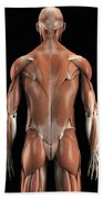 Muscles Of The Upper Body Rear Beach Towel