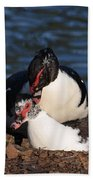 Muscovy Love Beach Towel