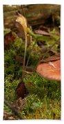 Mushroom N Moss Beach Towel