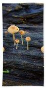 Mushrooms Amazon Jungle Brazil 4 Beach Towel