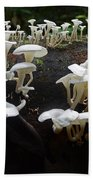 Mushrooms Amazon Jungle Brazil 5 Beach Towel