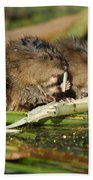 Muskrat Trio Beach Towel